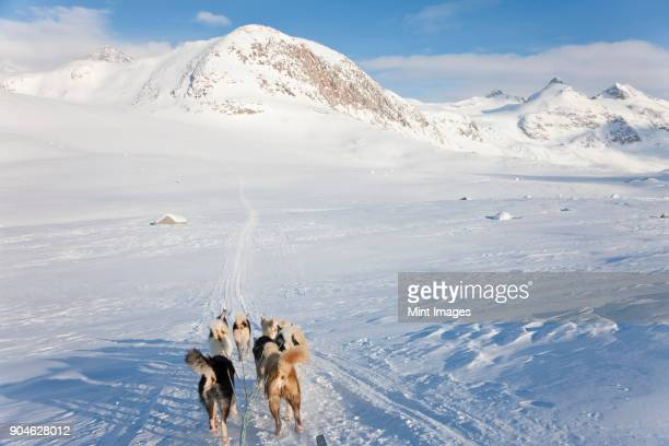 Winter landscape with pack of Huskies pulling a sledge.