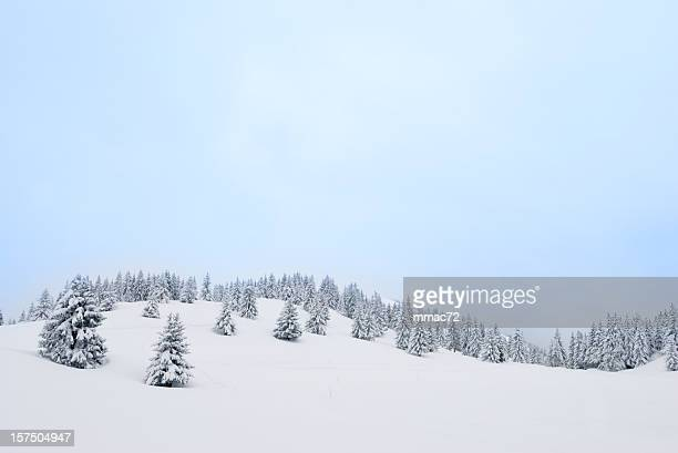 winter landscape with snow and coniferous trees - spruce tree stock pictures, royalty-free photos & images