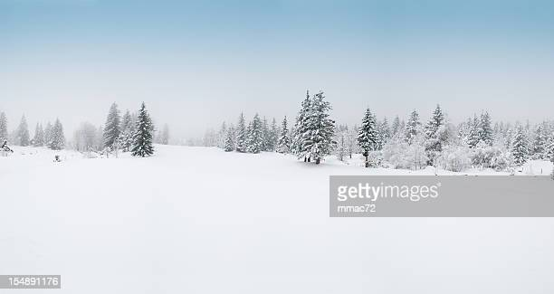 winter landscape with snow and trees - poolklimaat stockfoto's en -beelden