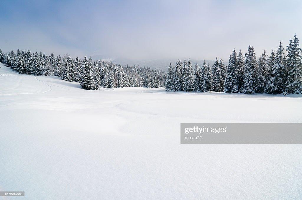 Winterlandschaft mit Schnee UND Bäume : Stock-Foto