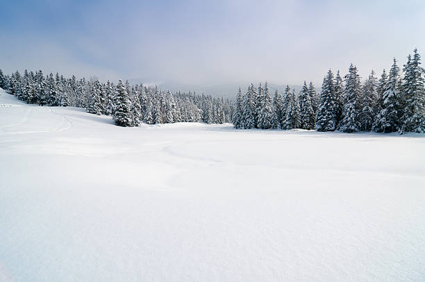 winter landscape with snow and trees - horizontal stock pictures, royalty-free photos & images
