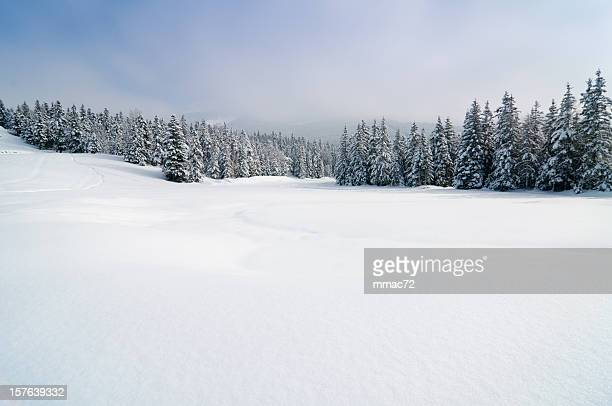 winter landscape with snow and trees - landschap stockfoto's en -beelden