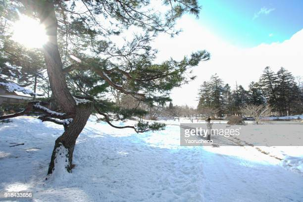 Winter landscape with snow in mountains, Nagano,Japan