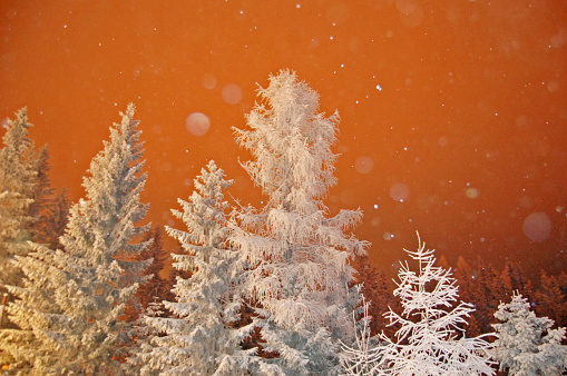 Winter landscape with the forest, Snow - gettyimageskorea