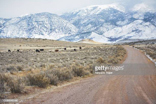 winter landscape with winding dirt road, cattle, and a snow covered mountain. - sagebrush stock pictures, royalty-free photos & images