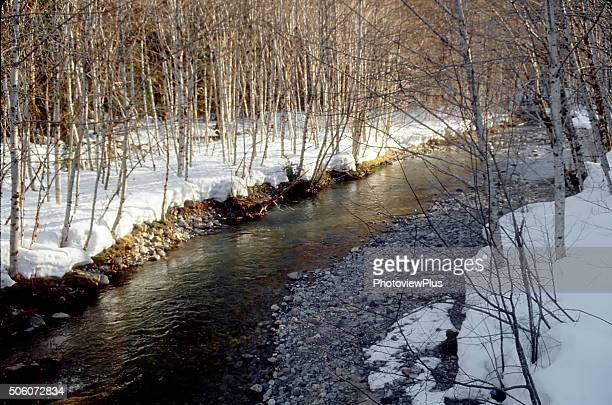 Winter Light on a Mountain Stream