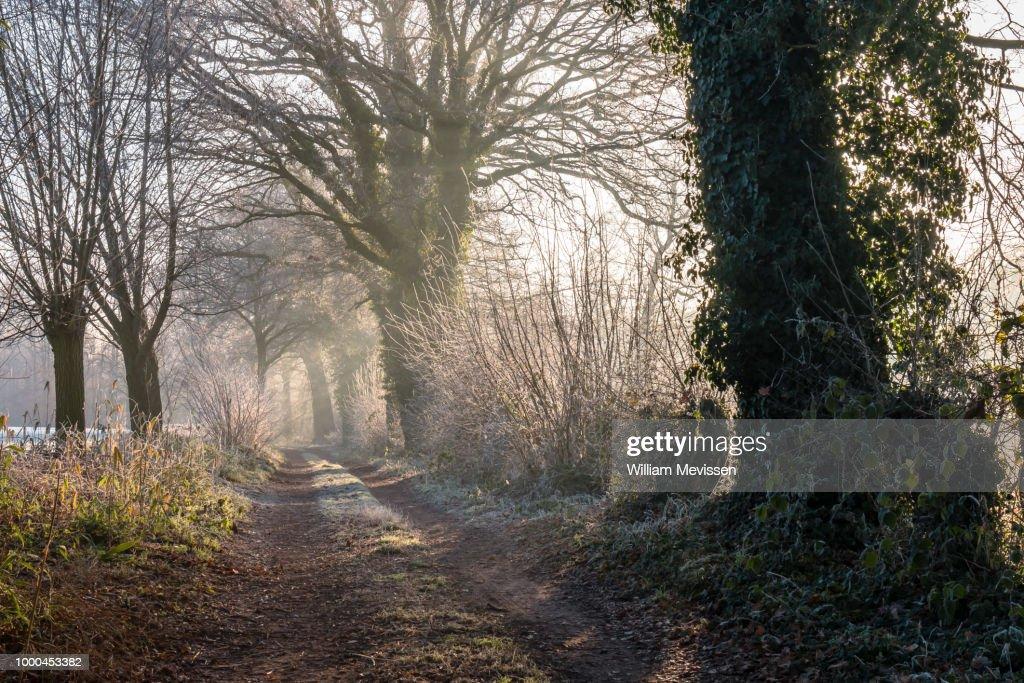 Winter Light Path : Stockfoto
