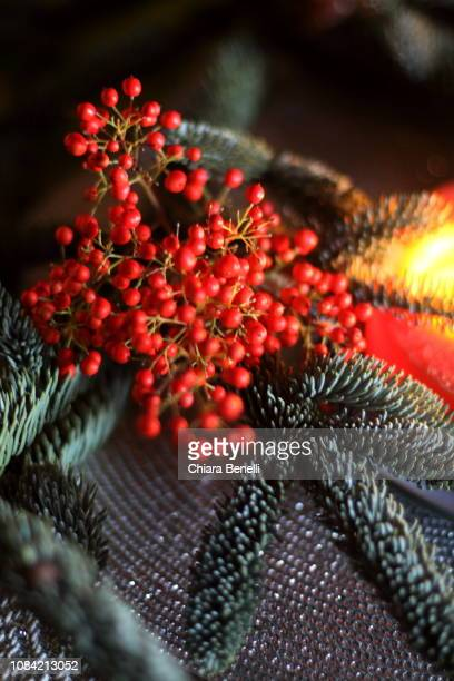 winter light - what color are the berries of the mistletoe plant stock pictures, royalty-free photos & images