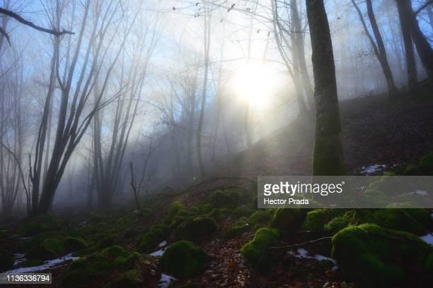 winter lights in the forest - hector vivas fotografías e imágenes de stock