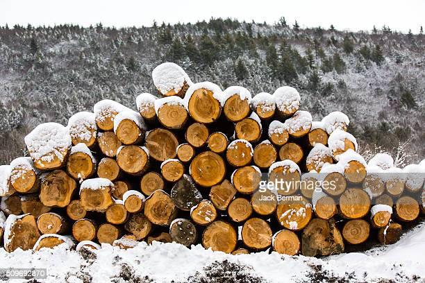 Winter Logs