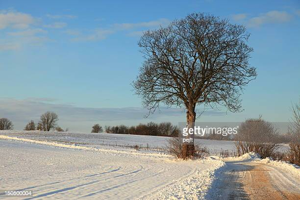 Winter - Lonely tree in the fields by dirt track