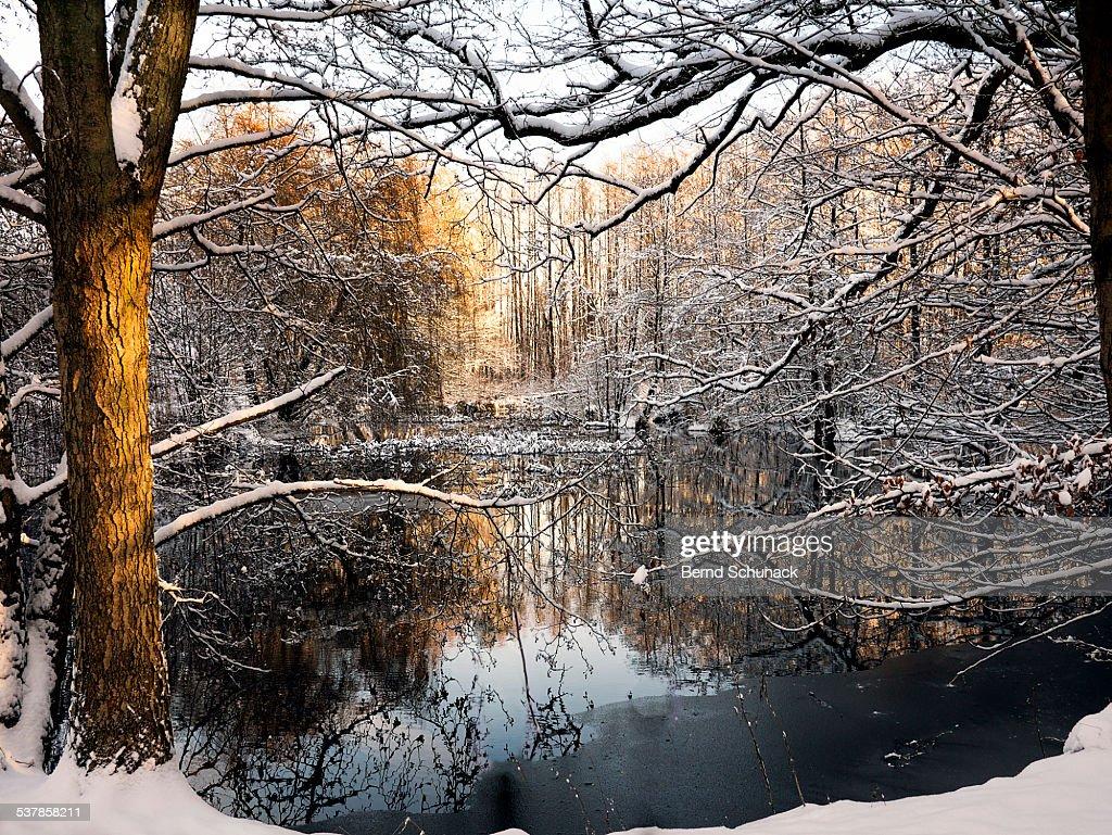 Winter Magic : Stock-Foto