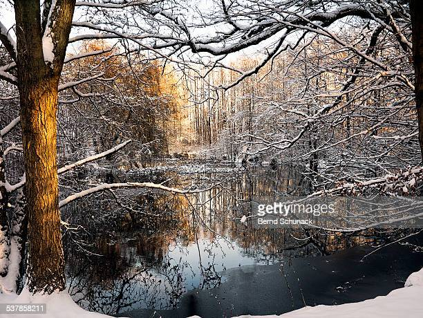 winter magic - bernd schunack stockfoto's en -beelden