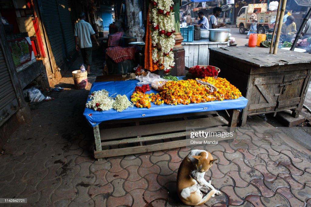 Winter Morning At Kolkata : Stock Photo