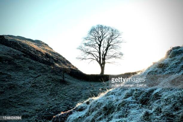 winter morning at sycamore gap hadrian's wall - bare tree stock pictures, royalty-free photos & images