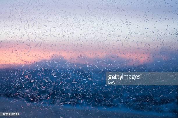 invierno por la mañana - enero fotografías e imágenes de stock