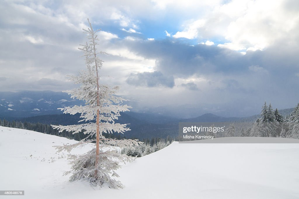 Winter morning : Stock Photo