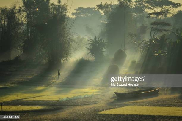 winter morning - winter bangladesh stock photos and pictures