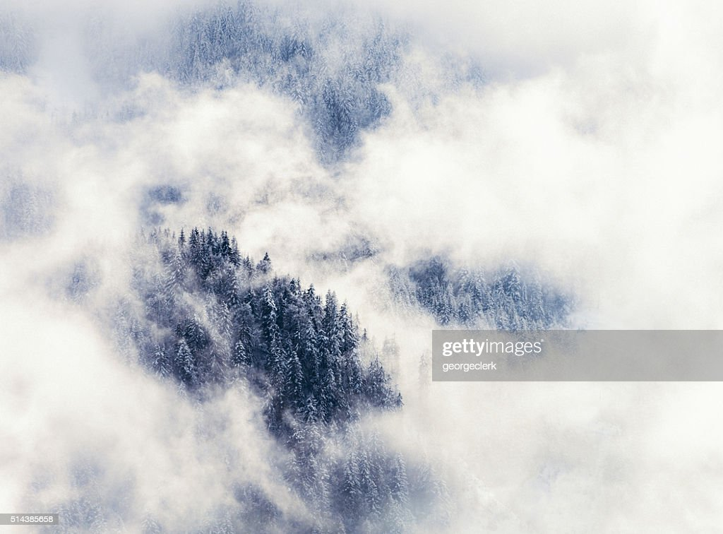 Forêt d'hiver dans les montagnes enveloppées de brume : Photo