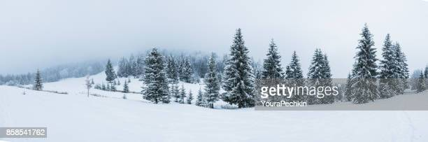 Winter mountain panorama - Ukraine