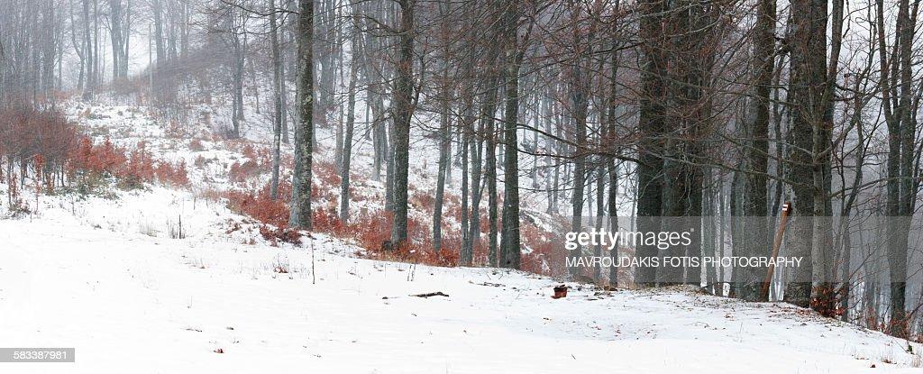 Winter mountain trail : Stock Photo