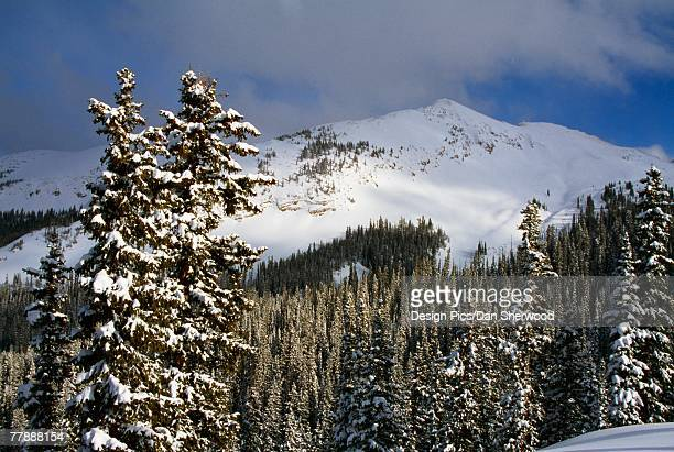 winter mountain view of gunnison national forest - dan peak stock photos and pictures
