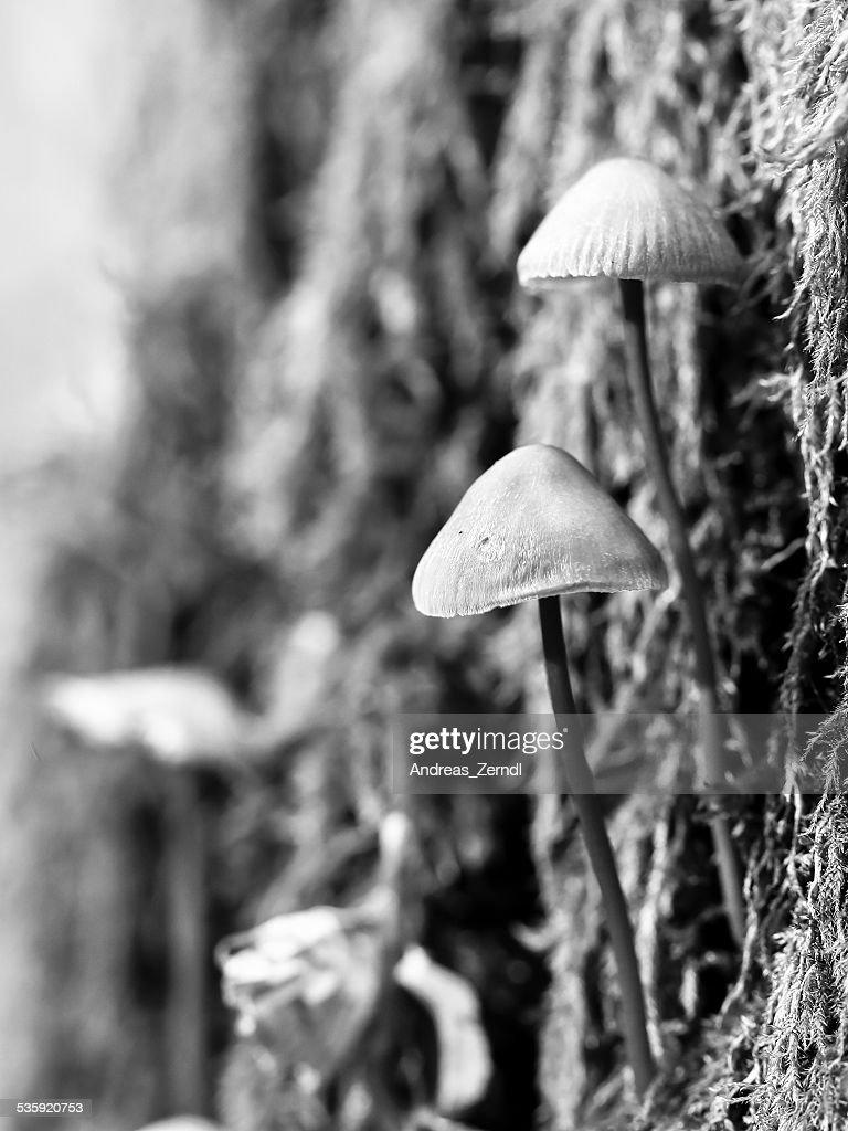 Winter Mushroom : Stock Photo