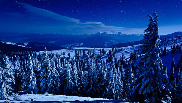 Winter Night Wall Art