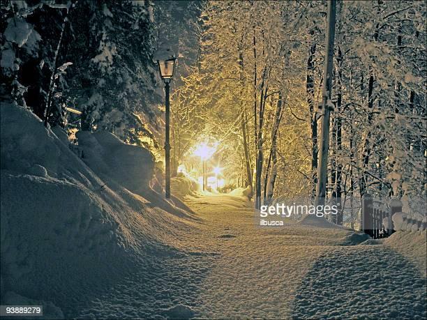 Winter night snowy scene