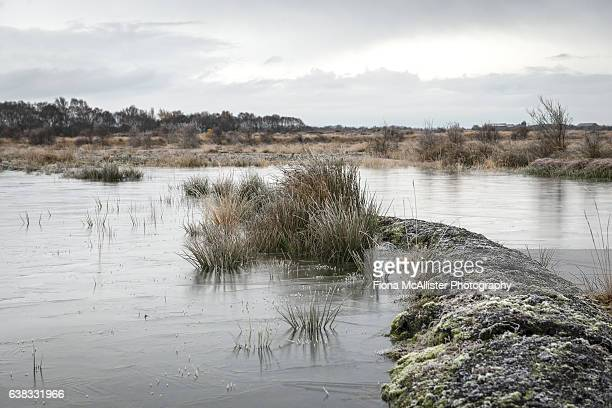 Winter On The Wetlands of the Solway