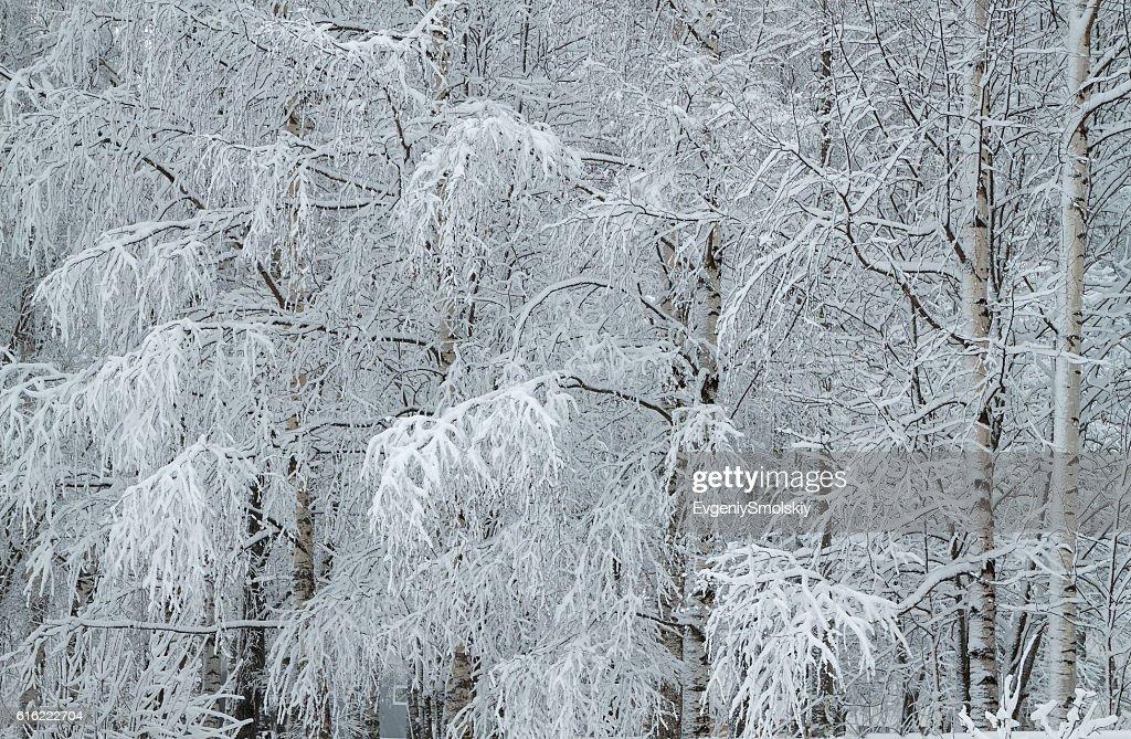 winter park : Bildbanksbilder