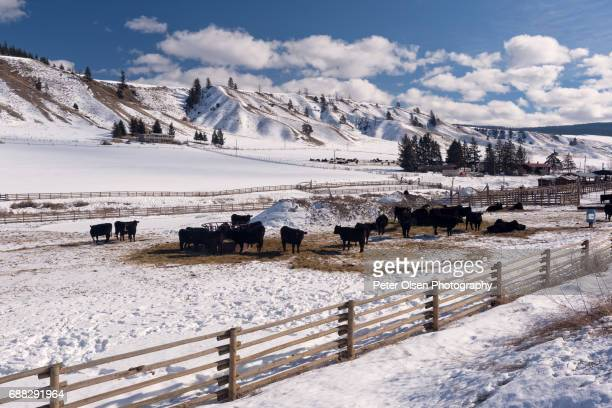 Winter Pasture over Shumway