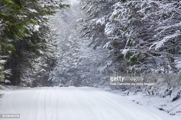 Winter Path full of snow at Ushuaia, Patagonia, Argentina