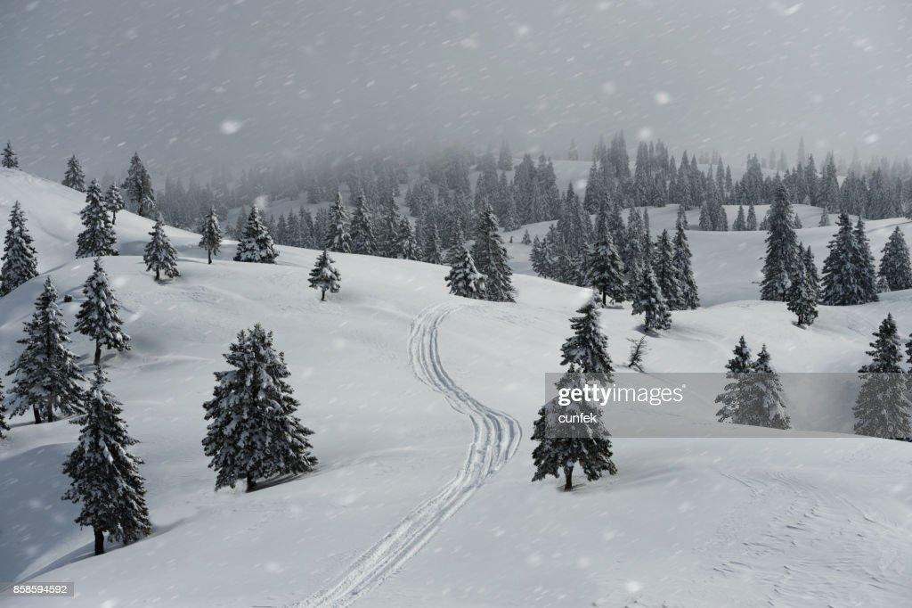 Winter-Pfad im Blizzard : Stock-Foto