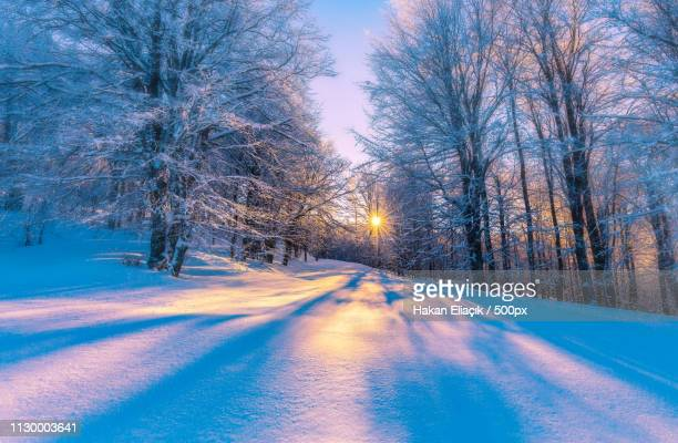 winter - winter stock pictures, royalty-free photos & images