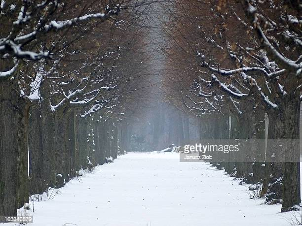 winter - charlottenburg palace stock pictures, royalty-free photos & images