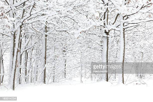 winter - deep snow stock pictures, royalty-free photos & images