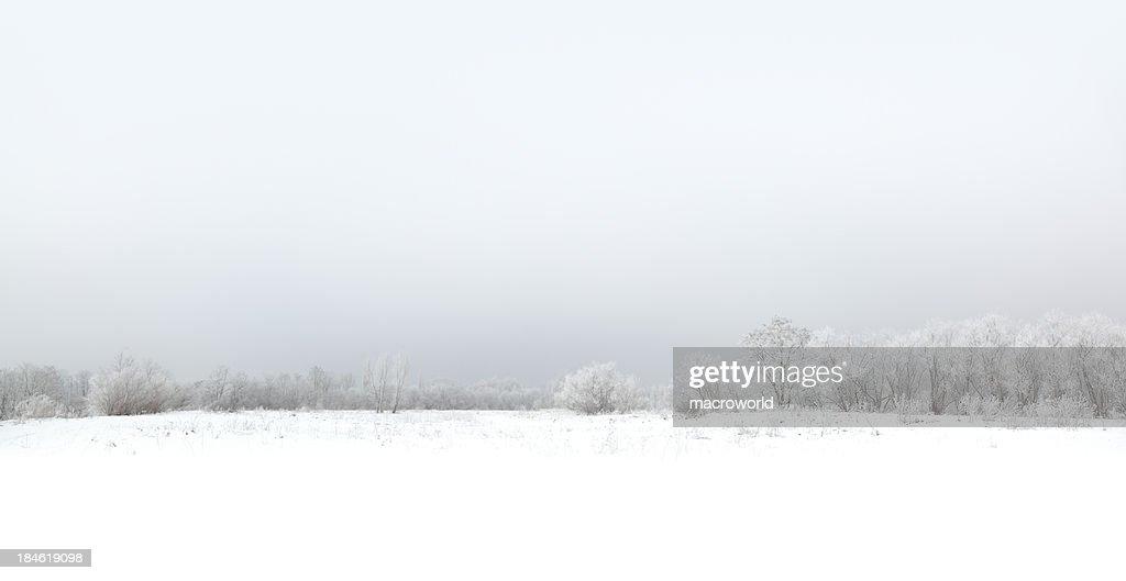 Winter : Stock Photo