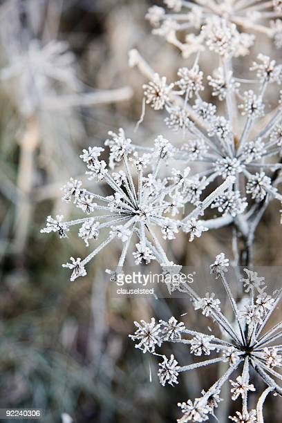 winter - january stock pictures, royalty-free photos & images