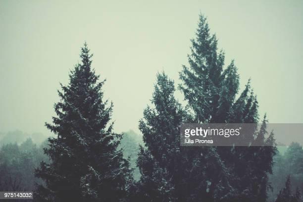winter - andorra fotografías e imágenes de stock