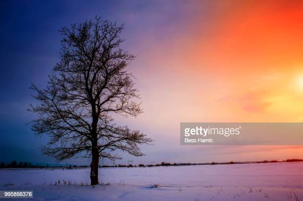 winter - dawn bess stock pictures, royalty-free photos & images