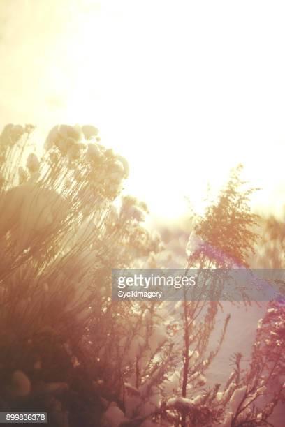 Winter plants against bursting sunlight