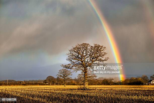 Winter Rainbow and Ancient Oak Tree