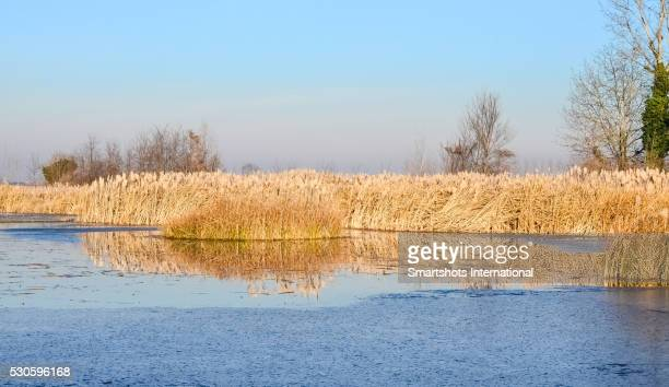 Winter reflection on icy swamp with clear sky