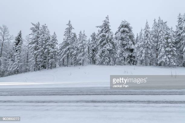 winter road and evergreen trees after a snowstorm - snow storm stock photos and pictures