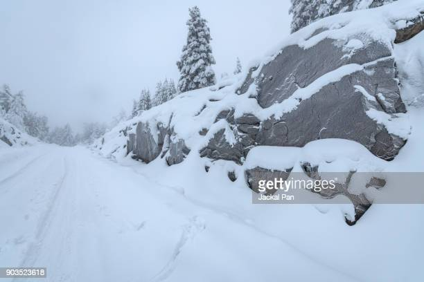 Winter road and evergreen trees after a snowstorm