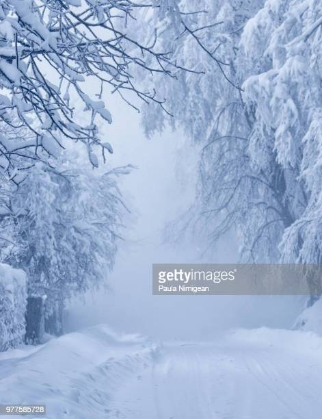 winter road in snow - snow storm stock photos and pictures