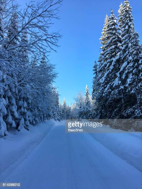 Winter road surrounded by trees covered in snow