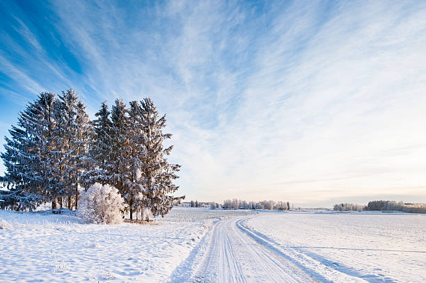 Winter Road Through Sweden Wall Art
