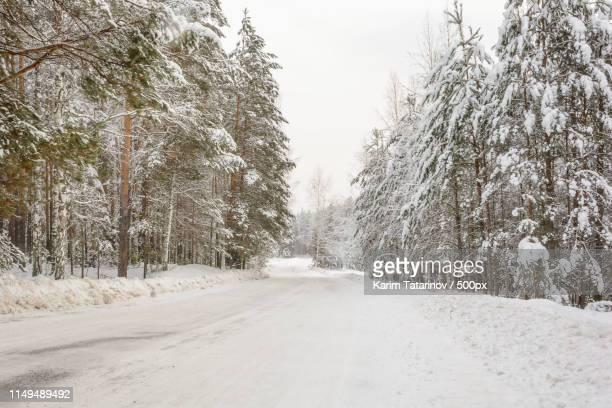 winter road, trees, snow day - karim bonnet photos et images de collection